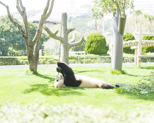 舞台子役→就職→カメラマン!? 動物園カメラマン寺島由里佳さんに聞いた「好きなことの見つけ方」